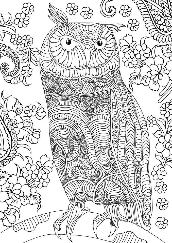 Adult coloring. Owl coloring page | Zentangle, Doodle & Designs ...