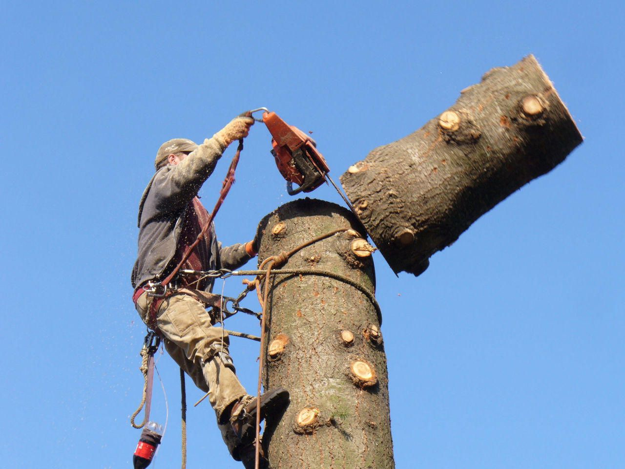 Removing a tree can be a dangerous and complicated task if you do not know  how to do it correctly. You should hi…   Tree removal, Tree service, Tree  removal service