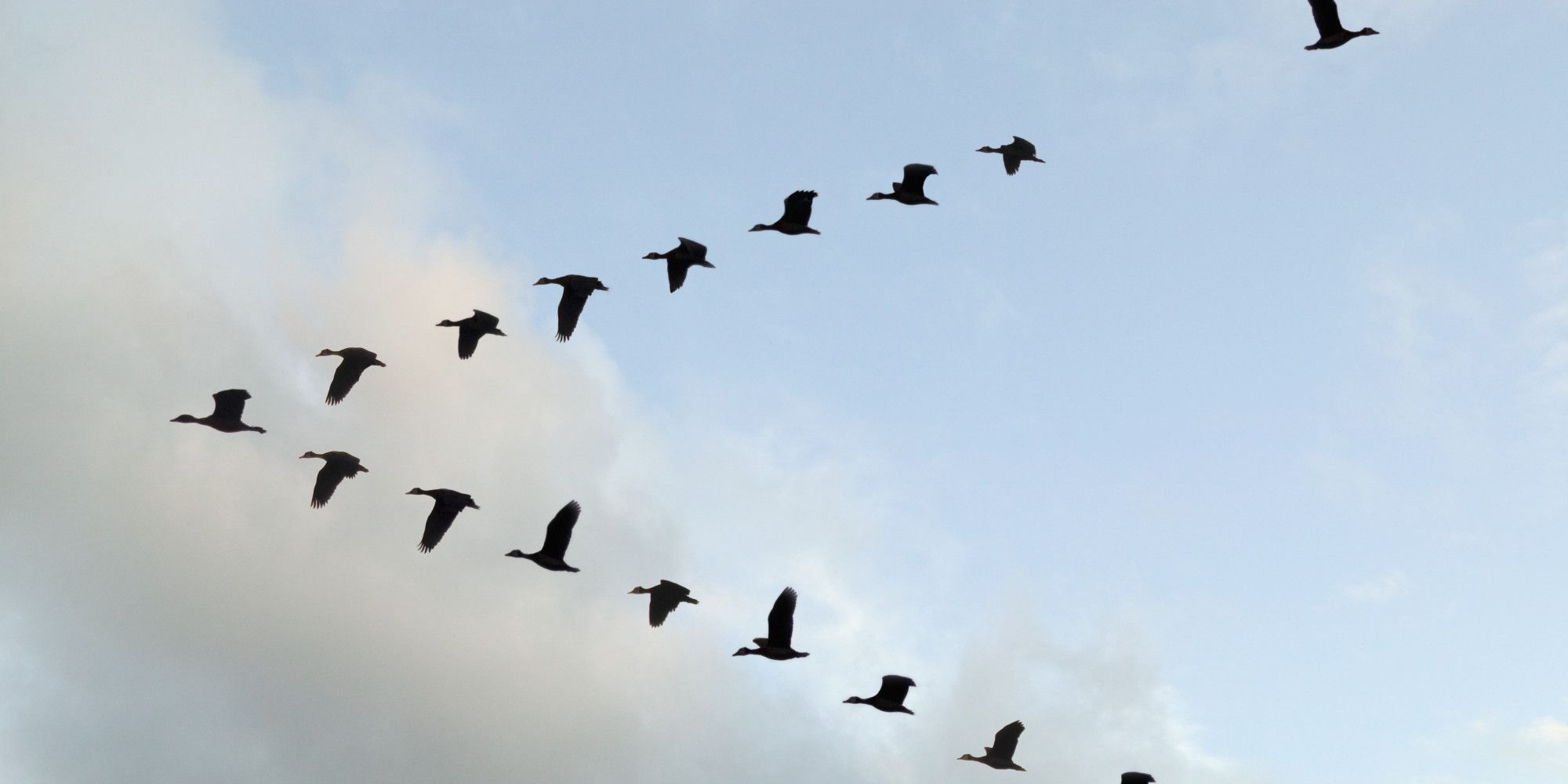 Here S Where Hub Buyers Migrate When Condo Prices Rise Birds Flying Bird Pictures Birds