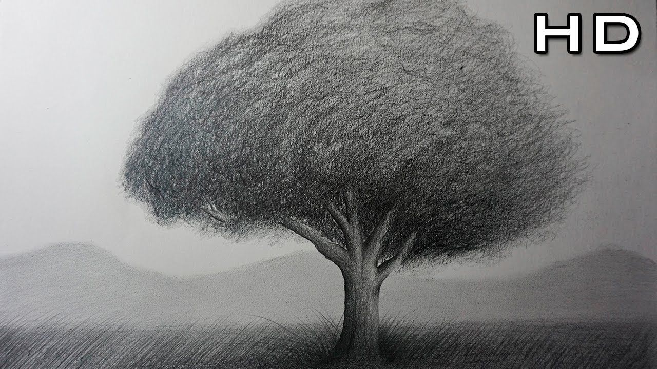 Cómo Dibujar Un Árbol Realista A Lápiz Paso A Paso Para