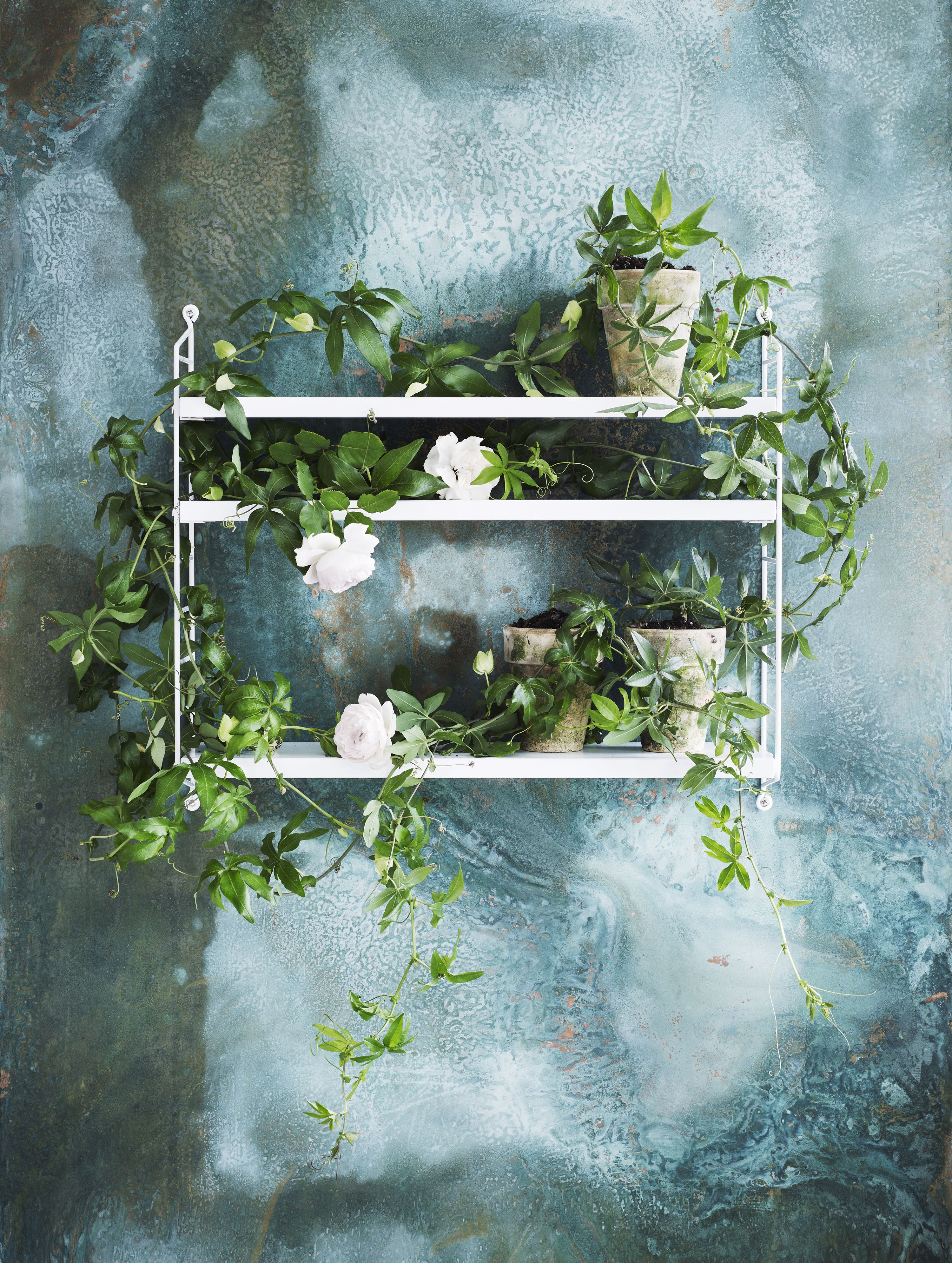 beautiful outside wall decoration with white trailing flowers (passionflower and camelias?)