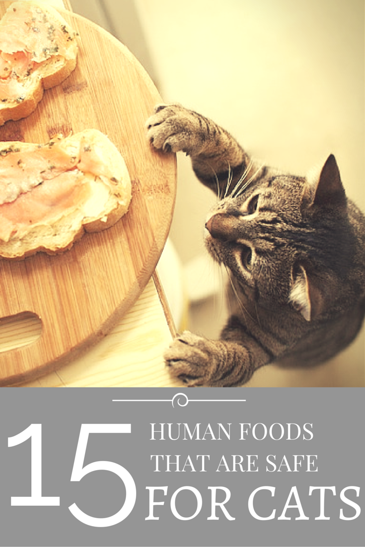 Searching for a healthy snack for your cat? Fortunately