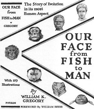 Our face from fish to Man, William King Gregory, 1929