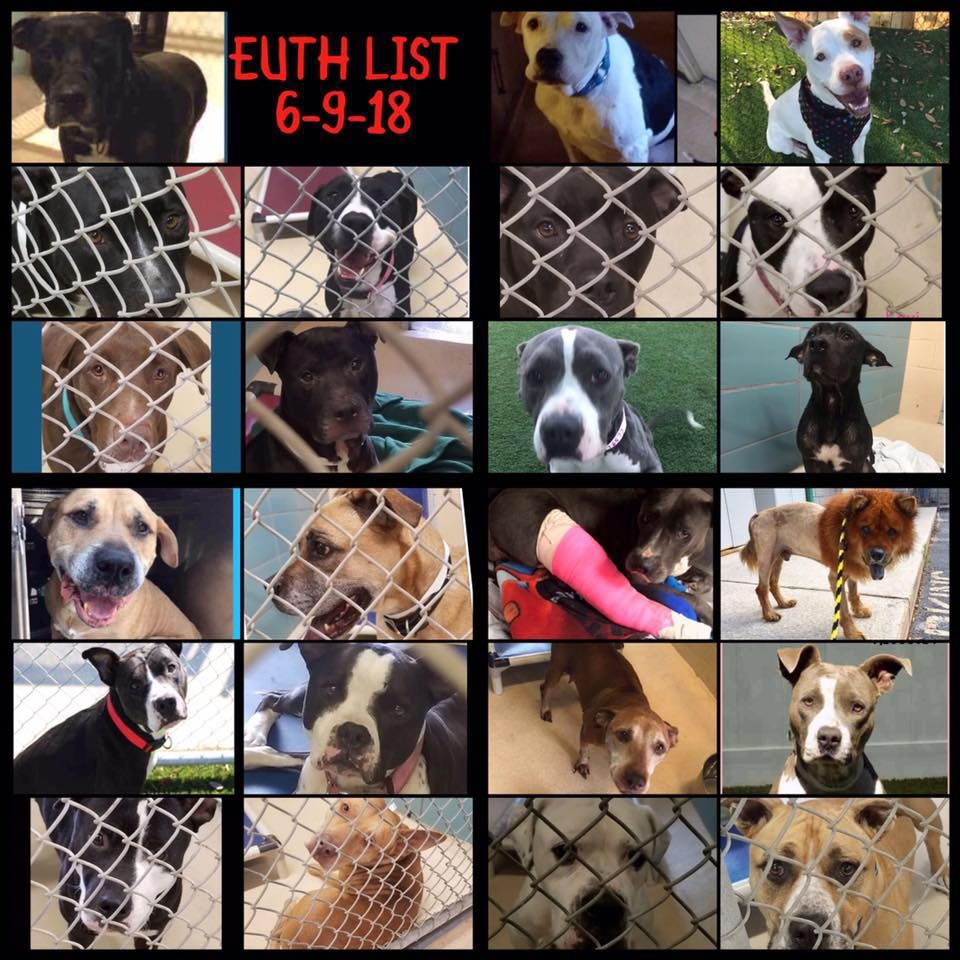 30 Now It Is 30 Dogs On The Euth List 30 Dogs Our Bocc And Director Should Be Ashamed 4 Years Director Trebatoski And You Have Losing A Dog Terrier Dogs Dogs