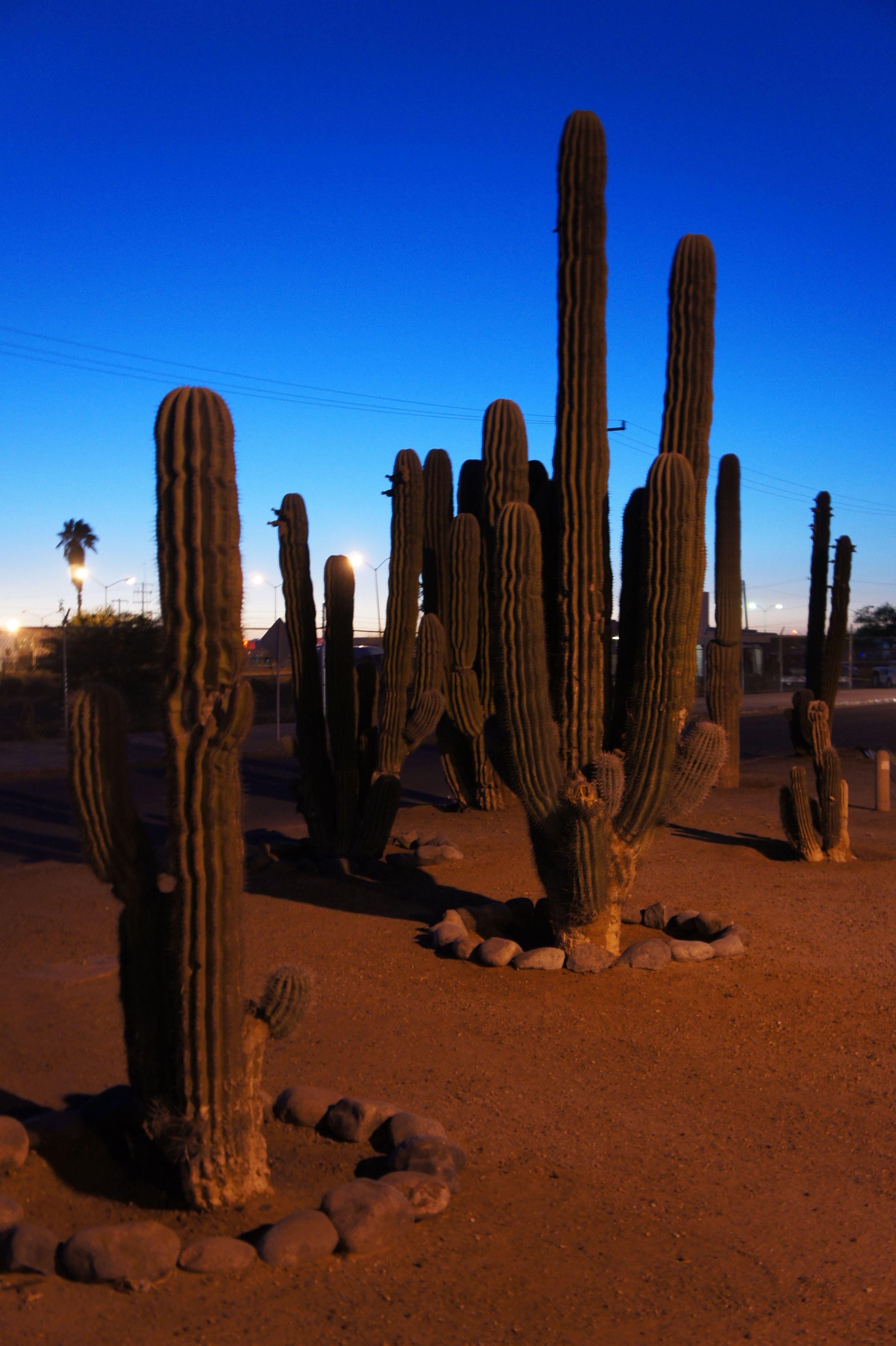 Hermosillo Sonora. Desierto En La Ciudad. Sonora