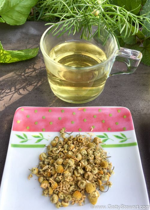 Top Herbs For Making Tea Garden Pinterest Chamomile Teas And