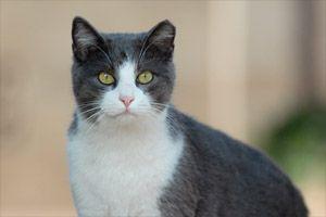 Best Friends Animal Society launches progressive community cat programs