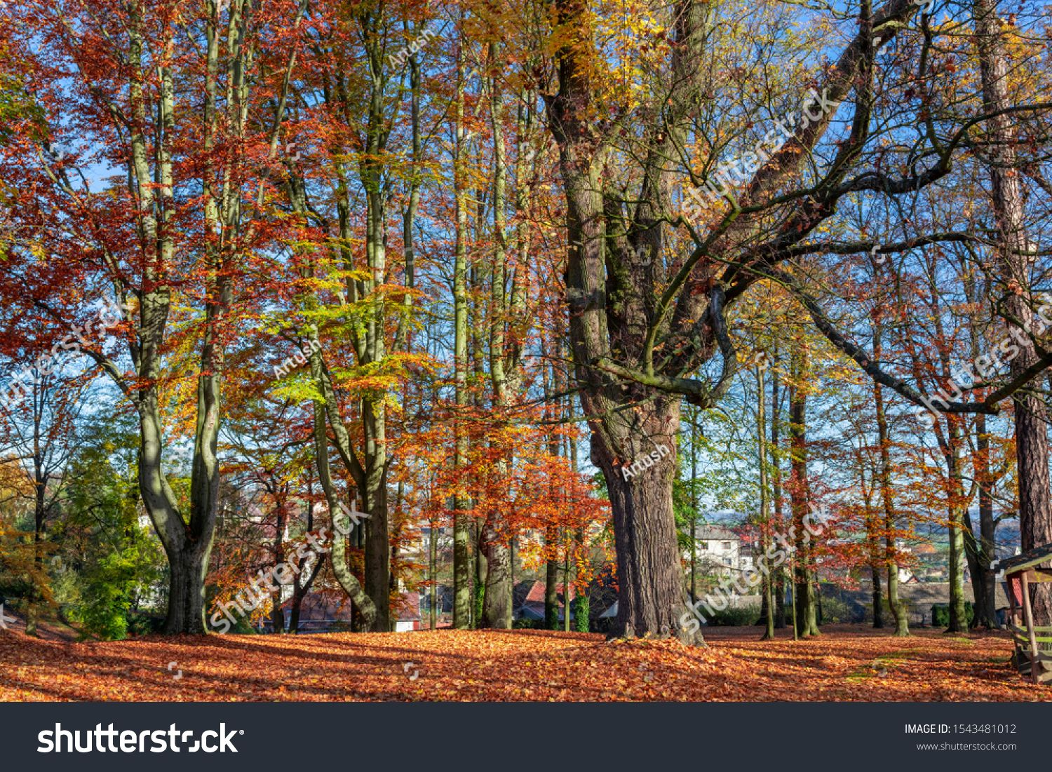 Romantic fall colored park with trees and morning sunlight. Autumn season natural background. Fall concept in park. Vivid colorful natural scene. Europe #Ad , #Aff, #morning#trees#Autumn#sunlight