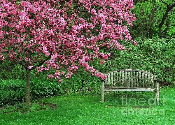I have one of these trees in my yard. I like the bench near it. Idea for my own yard.