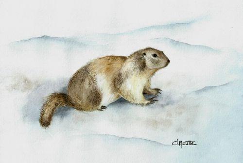 Petite Marmotte Des Hautes Alpes Marmotte Dessin Marmotte
