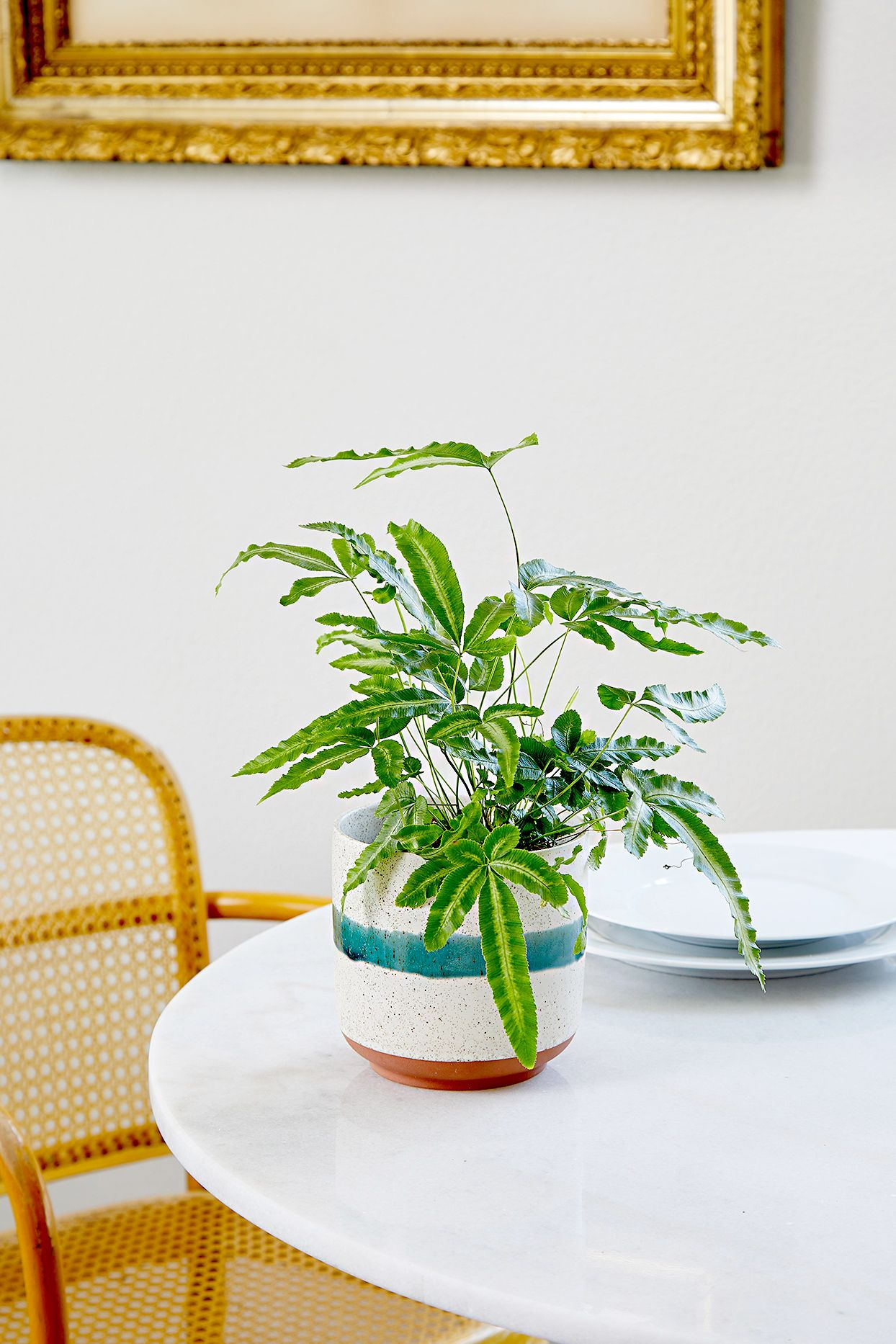 5 expert tips you need to know for growing indoor ferns
