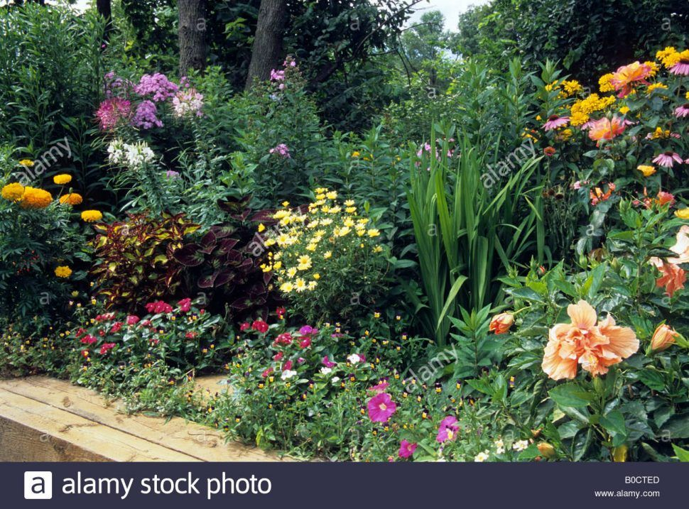 Image Result For Perennial Border For Plants Zone 7 Perennials Perennial Garden Garden Beds