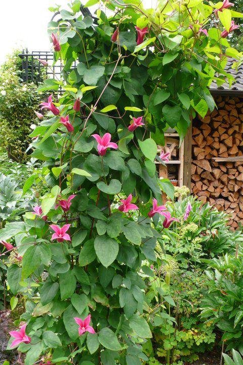 Afbeelding van http//www.gardenandflowers.nl/tl_files