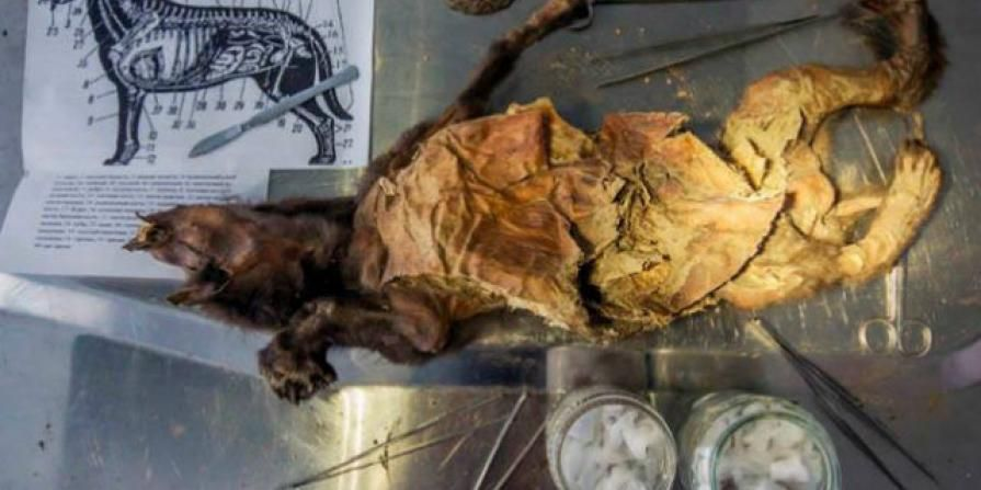 Woolly Mammoth is Beeing Revived: Scientists have just ... |Extinct Animals Found Frozen