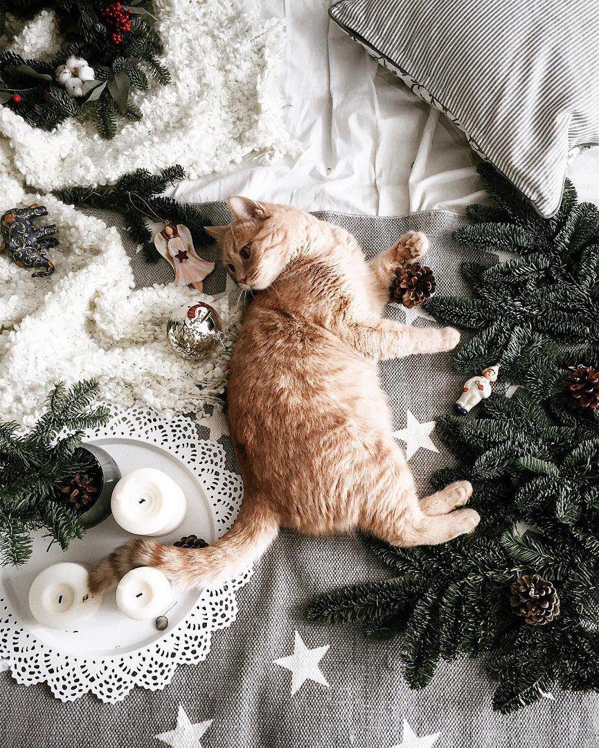 Доброе утро картинки новогодние с животными