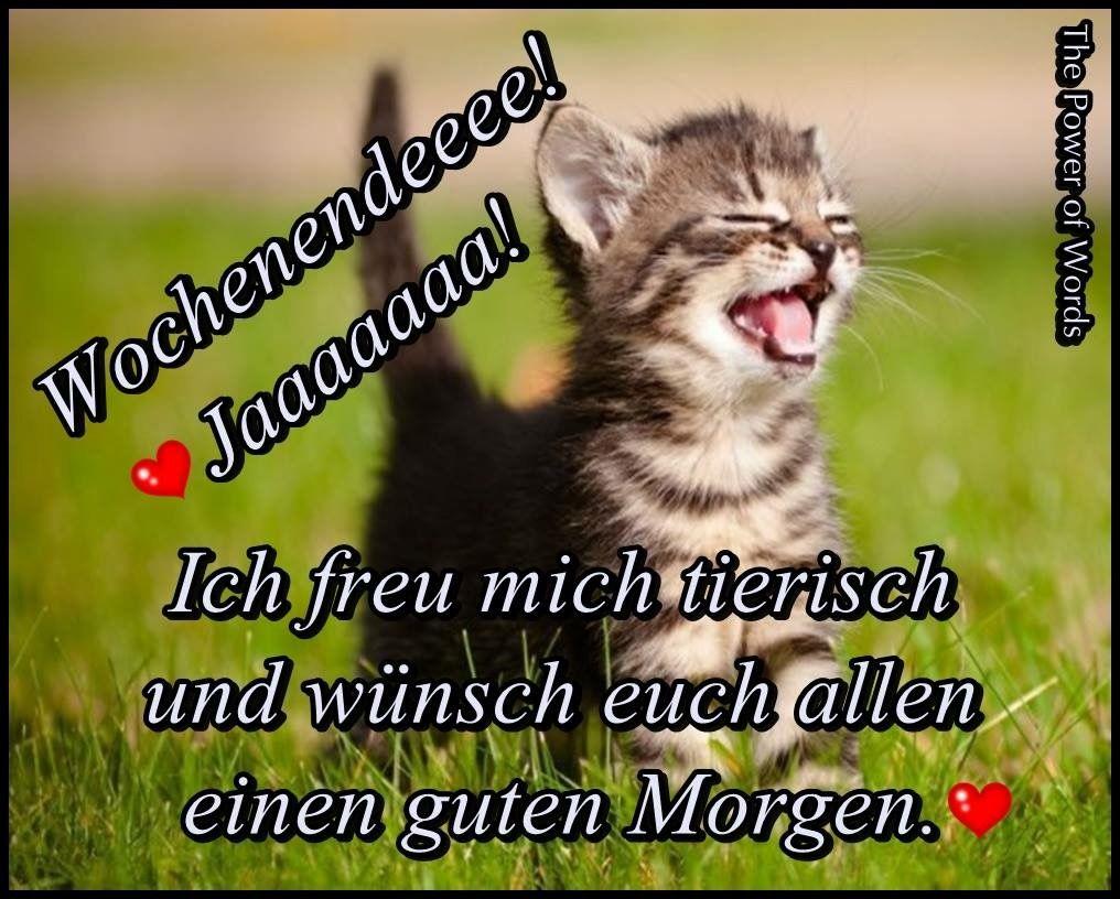 Pin Von Annett Uhlig Auf Tierische Wochentage Schönes