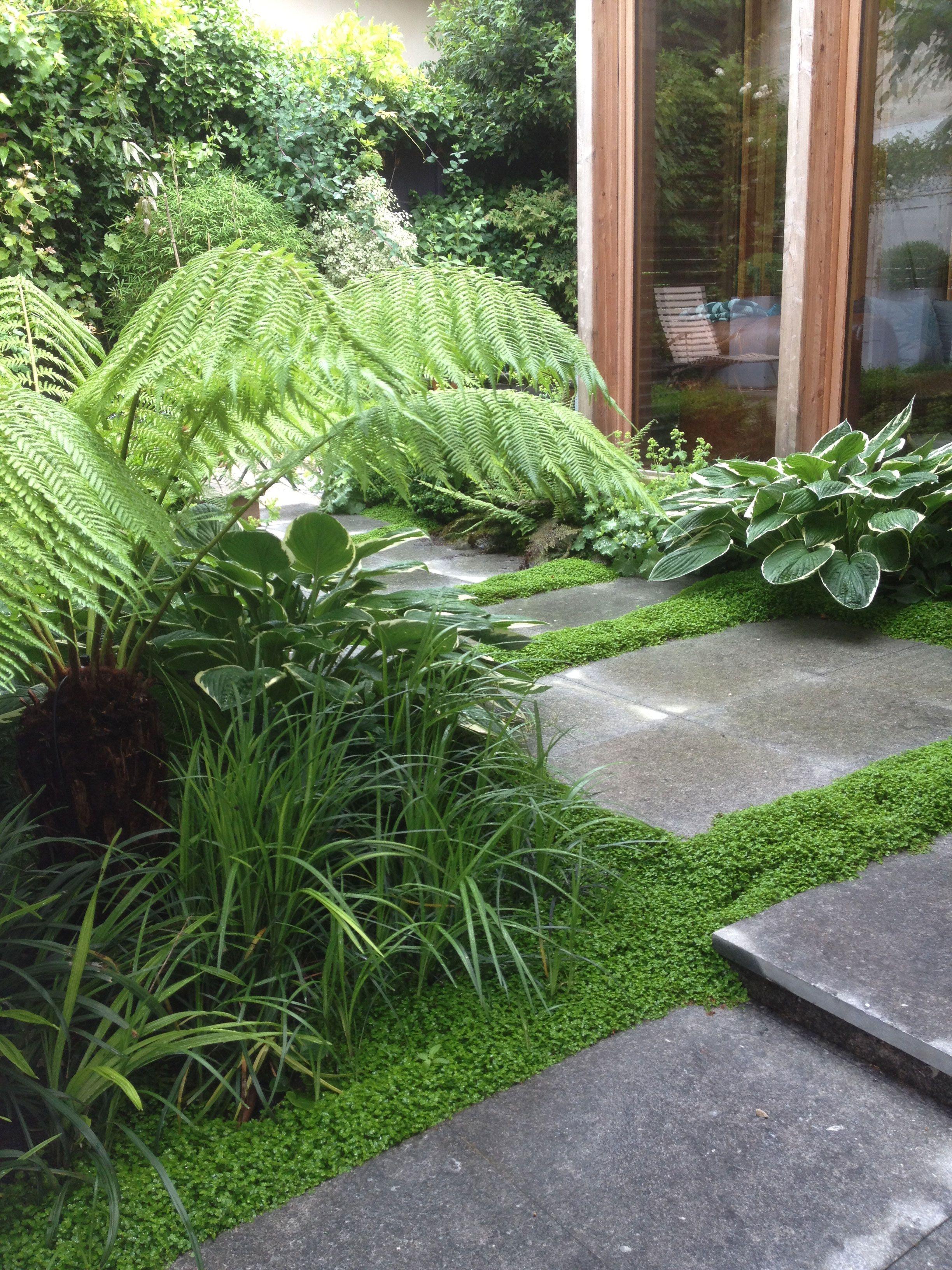 Photo Petit Jardin Exotique petit jardin conçu et réalisé par l'entreprise didier danet
