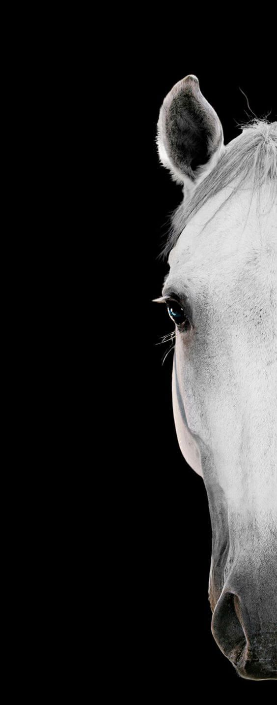 Close up on white horse face 12 of the most artistic horse photographs