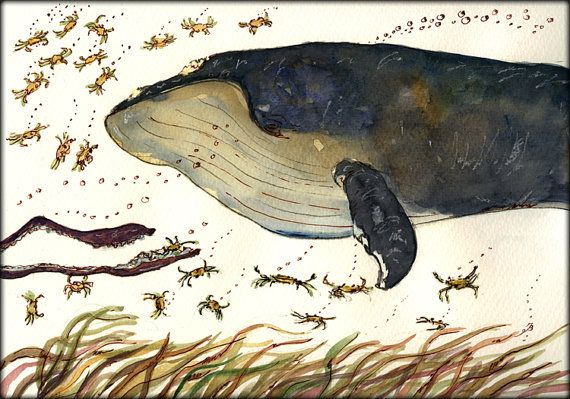 "Whale squid weed crabs sea marine mammal ocean animal nature 11x8"" 29x21  cm art original Watercolor painting by Juan bosco"