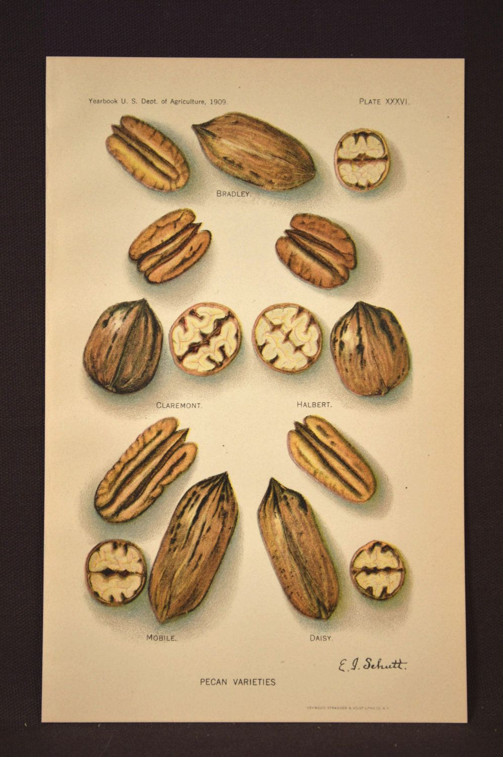 Kitchen Wall Art Kitchen Decor Vintage Nut Pecan Wall Decor ...