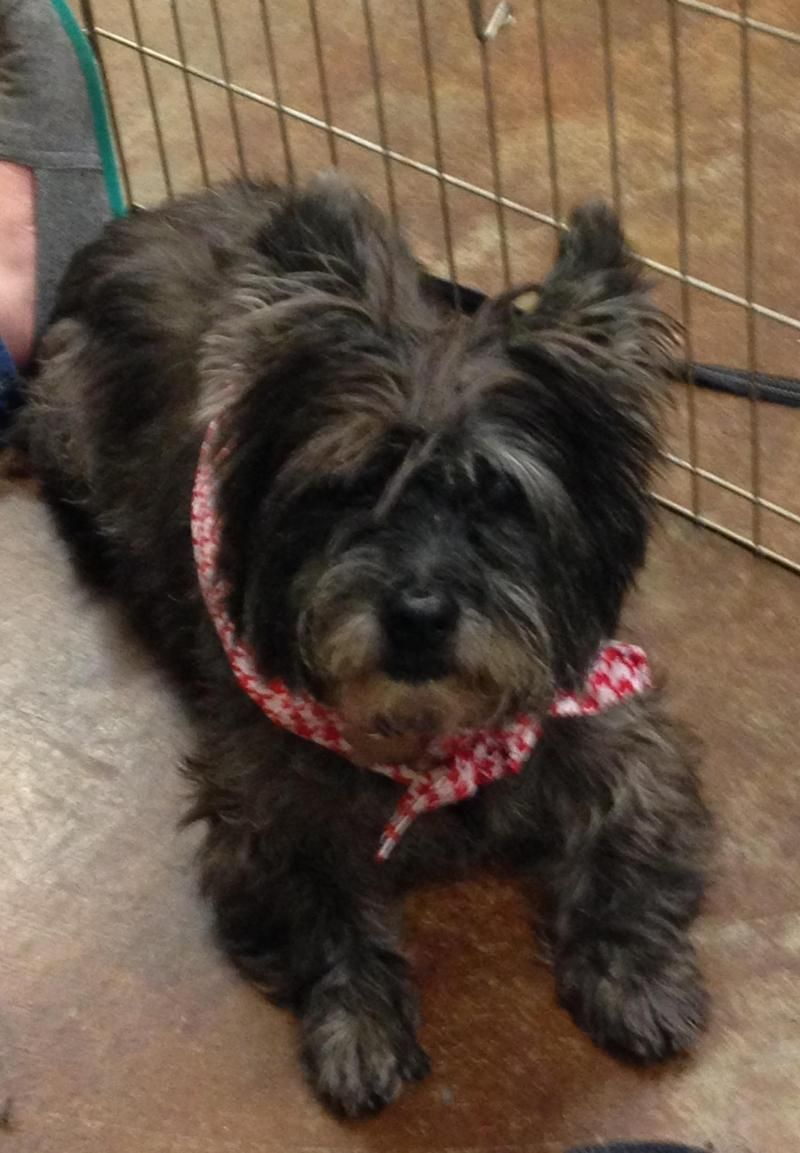 Adopt Alexis On A Dogs Prayer Terrier Dogs Adoption