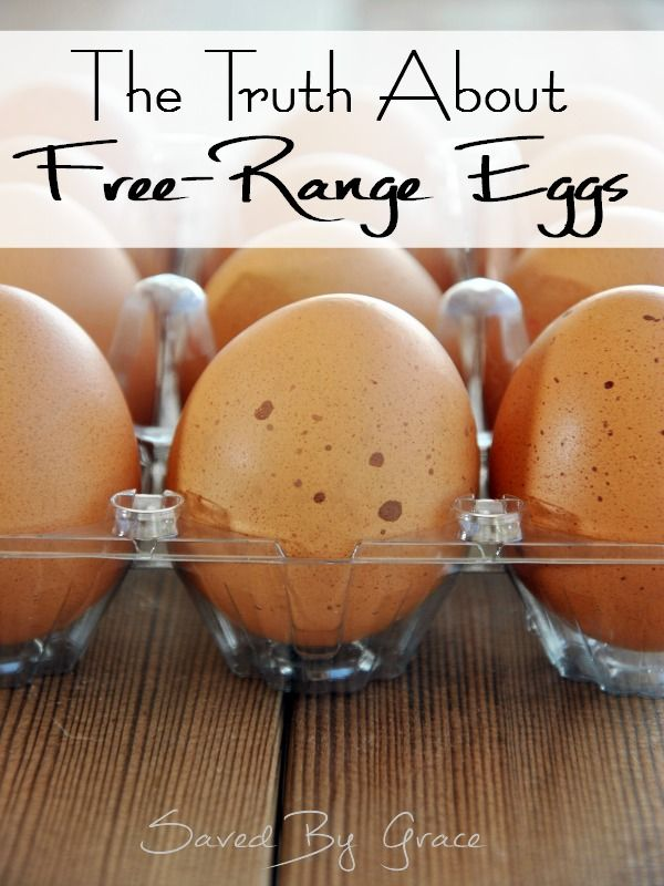 The Truth About Free Range Eggs Including Facts On All Egg Carton