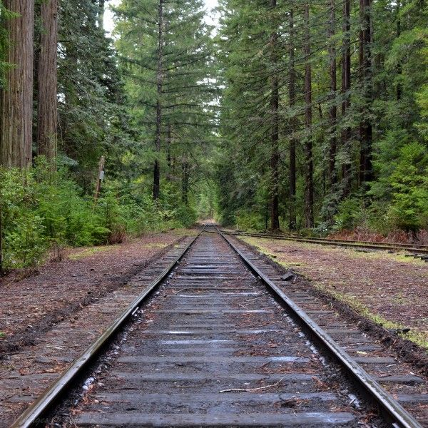 From trains to trees, from antelope to zebra and beaches to wine, here are our top picks among so many wonderful things to see and do in Mendocino County. #bbryanpreserve #bowlingballbeach #cityof10000buddhas