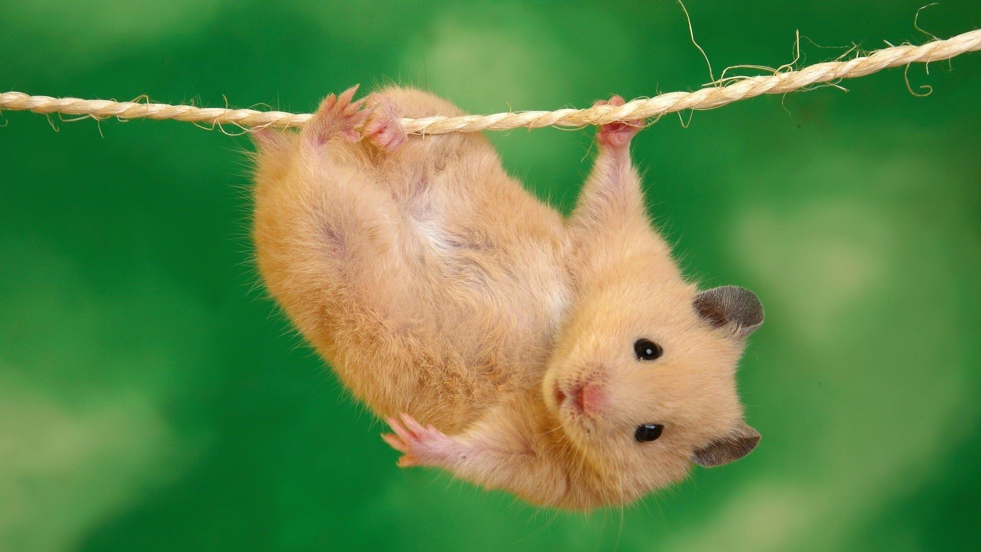 Cute Animal Hd Wallpaper Download Free Cute Animal Photos Funny Animal Photos Funny Hamsters