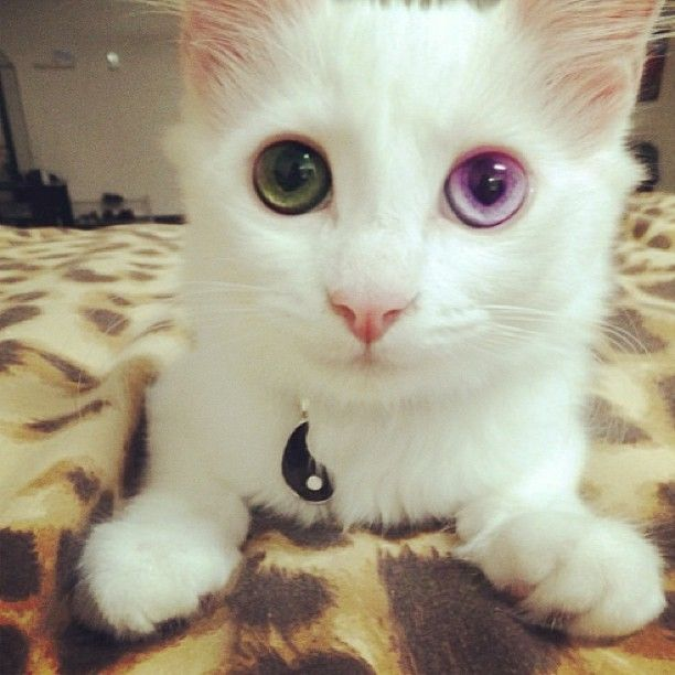 this cat ugh. can i have you