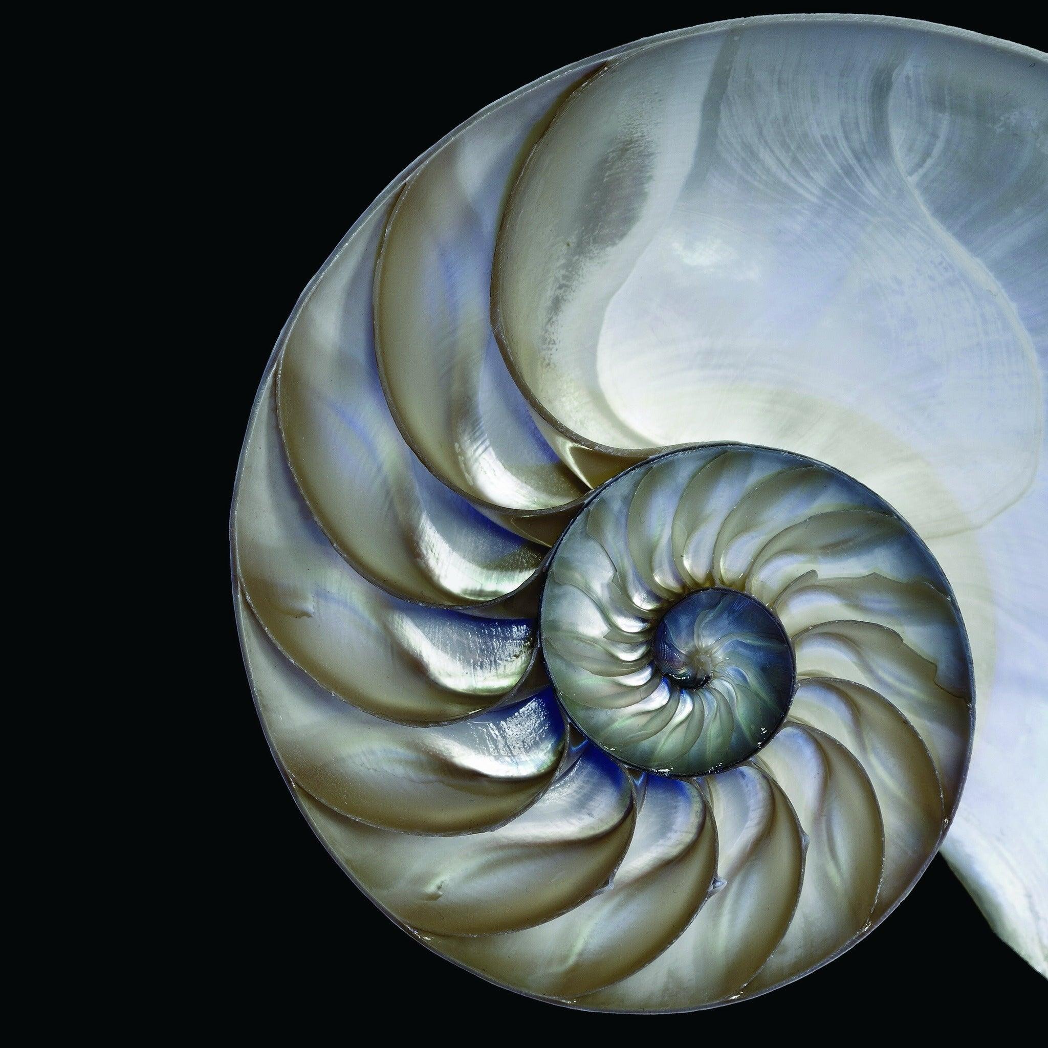 Empire art pearly nautilus frameless free floating