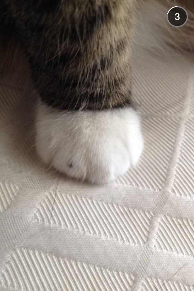 Soft fat white paw sock