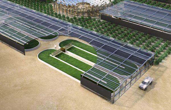 Qatar hace del desierto un maravilloso jardin de cultivo