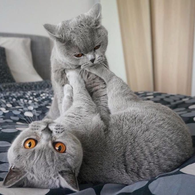 Russian catfight