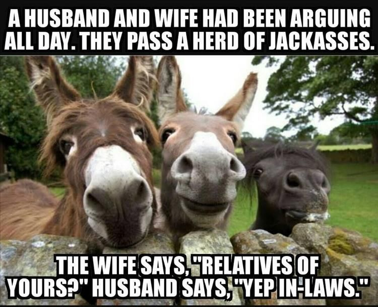 22d36a4095ede1337cfe84ab129d2685 funny pictures of the day 36 pics funny pictures pinterest,Donkey Waffles Meme