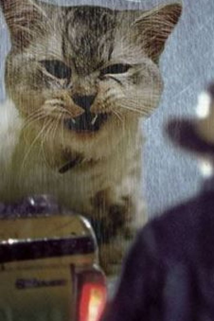 Someone Has Photoshopped Kittens Into Jurassic Park To Replace The