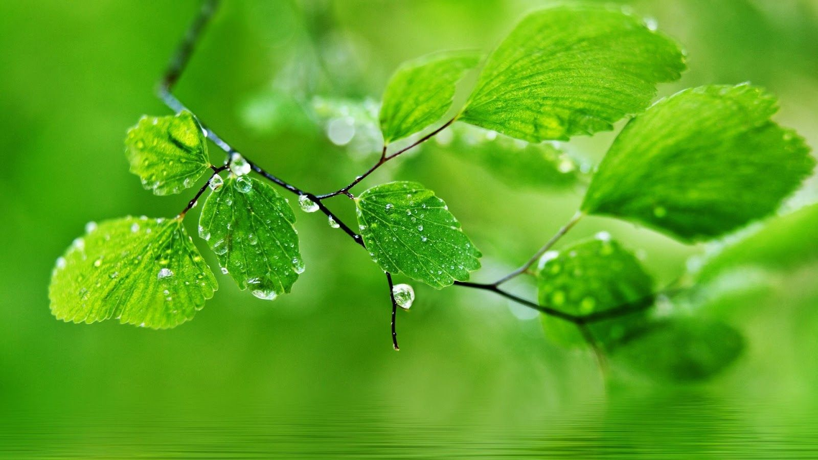 Water Drops Hd Wallpapers Very Beautiful And Much Interestingnow