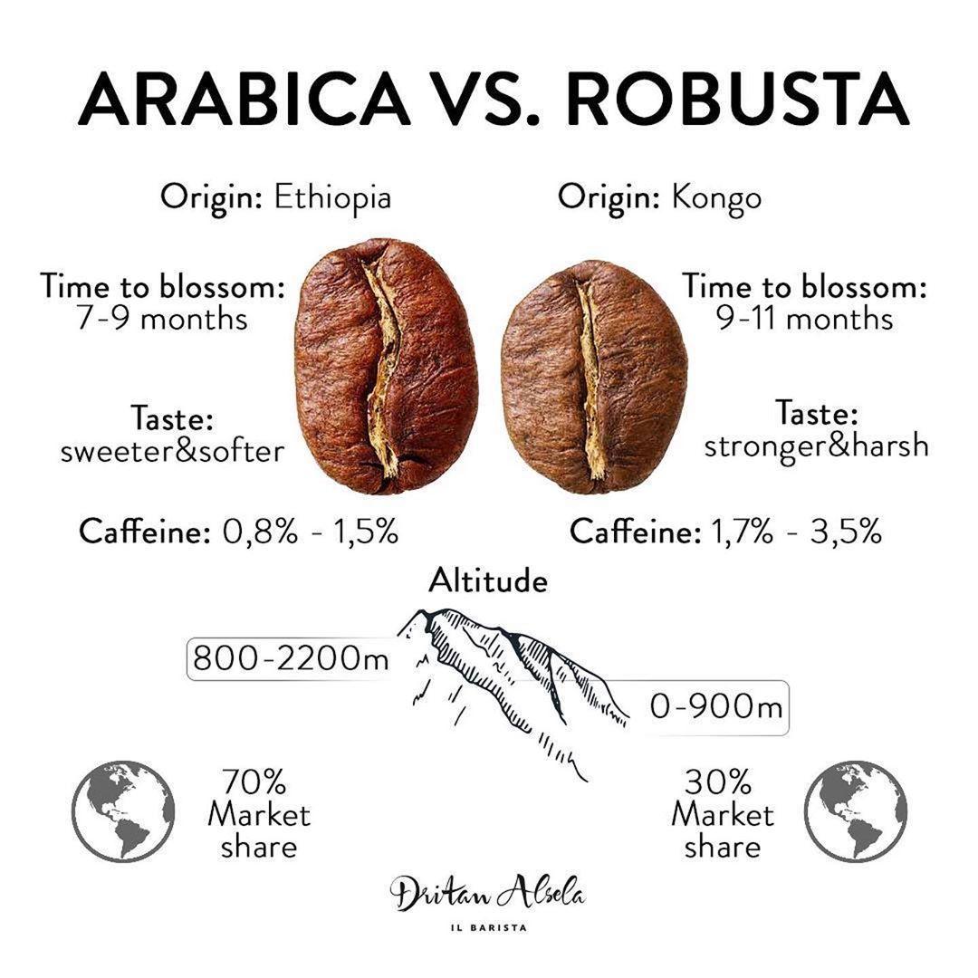 Arabica vs. Robusta Gourmet coffee beans, Coffee latte