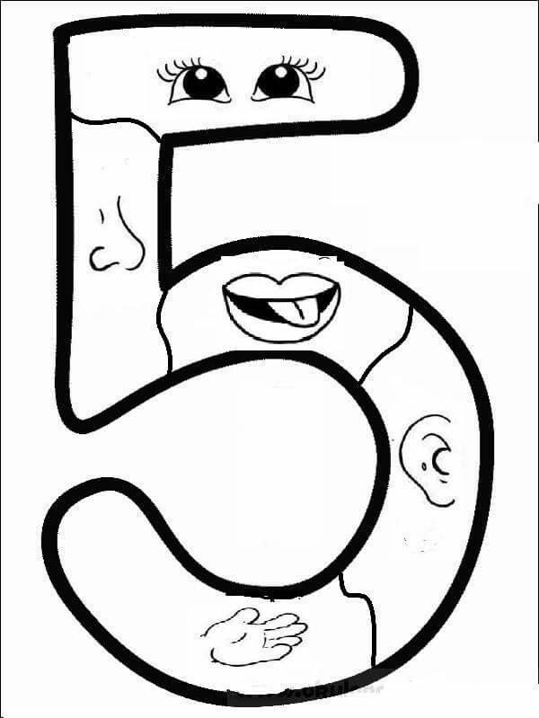 five senses coloring pages for toddlers - 5 duyu organi okuooncesi pinterest montessori