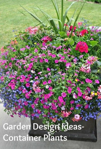 Garden Design Ideas U2013 Container Plants