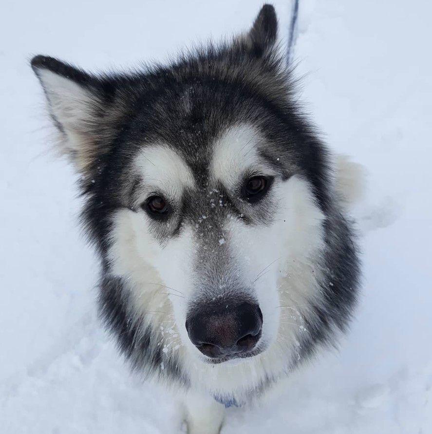 75 Big Dog Names For Male Dogs Dog Names Dog Names Male Big Dog Names