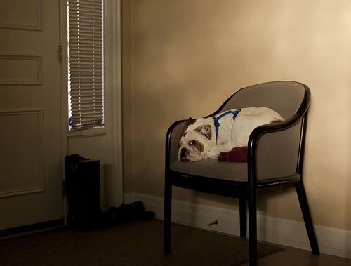 Waiting For You To Come Home Baby Life True Love Waits Bulldog