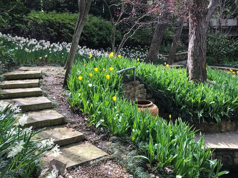 Inspiring Garden Design: A Daffodil Landscape In Dallas   Private Newport