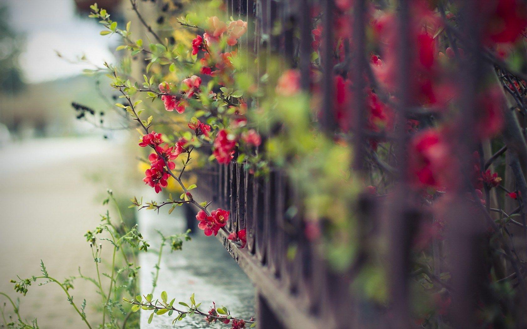 Pin by Beckey Douglas on pretty flowers  Pinterest  Pretty flowers