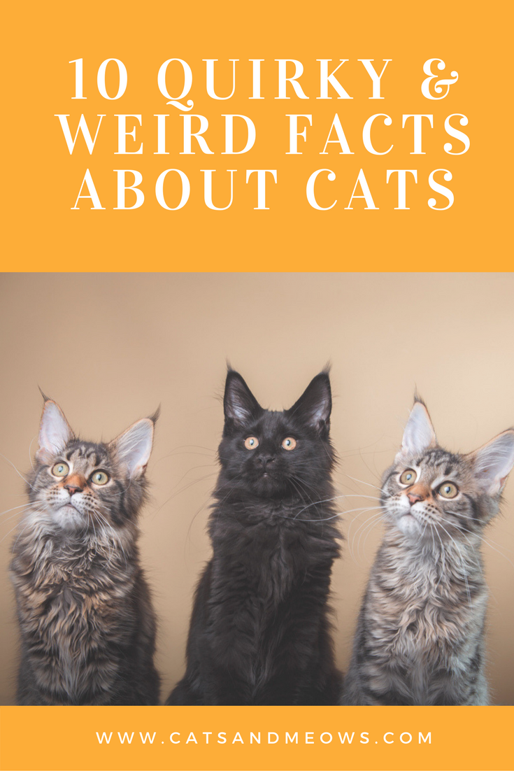 10 Quirky And Weird Facts About Cats 6 Will Reveal Your Cat S Respect Levels Cat Facts Cats Doing Funny Things Weird Facts