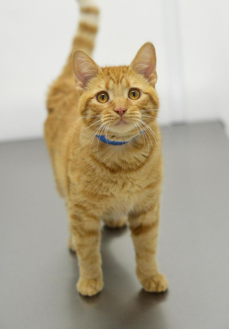 Adopt Garfield ADOPTED! on (With images) Cat shelter