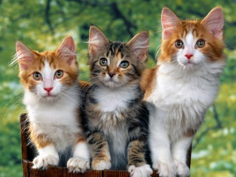 Hd Wallpapers Kitten Wallpaper Desktop 1600x1200 Wallpaper 540 Pieces Cute Cats And Dogs Dog Cat Pictures Cute Cat Wallpaper