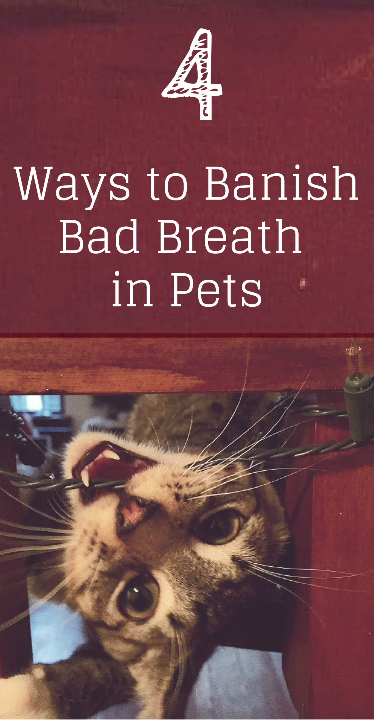 4 Ways To Banish Bad Breath In Pets With Images Cat Bad Breath Cat Breath Bad Cats