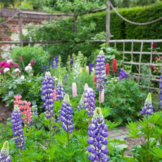 country garden ideas lupins and peonies country garden ideas homes gardens