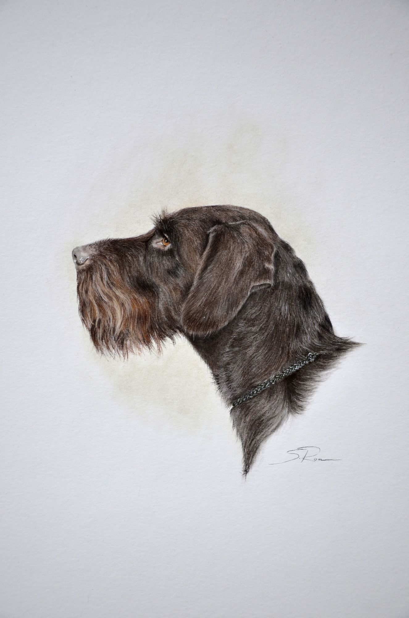 deutsch Drahthaar | dogs | Pinterest | German wirehaired pointer ...