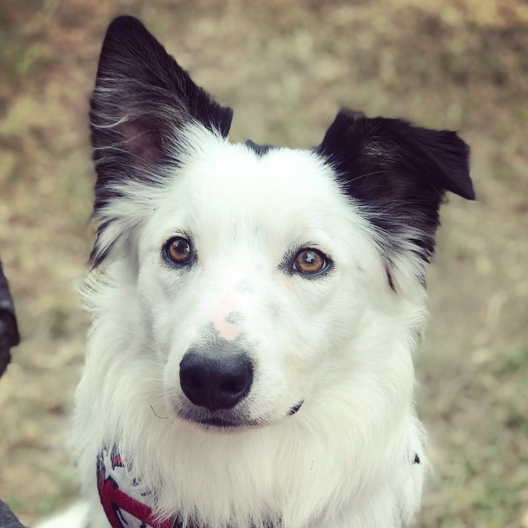 #dog #dogsofinstagram #dogs #puppy #dogstagram #instadog #doglover #love #dogoftheday #pet #doglovers #doglife #cute...